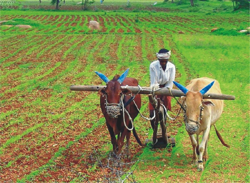 rural credit in india Data show that what is termed agricultural credit may have very little to do with agriculture, the way we know it one of the most intriguing features of india's agrarian economy in recent years.