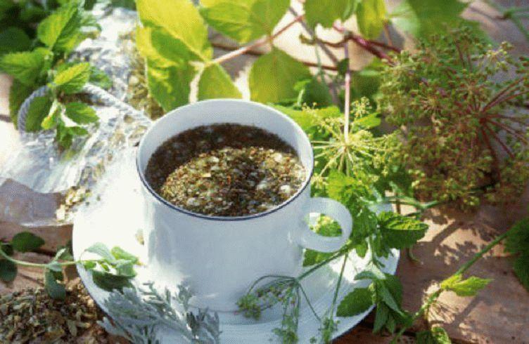 какие травы чистят сосуды от холестерина